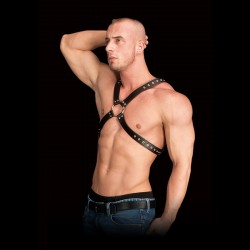 Harness OUCH! Adonis